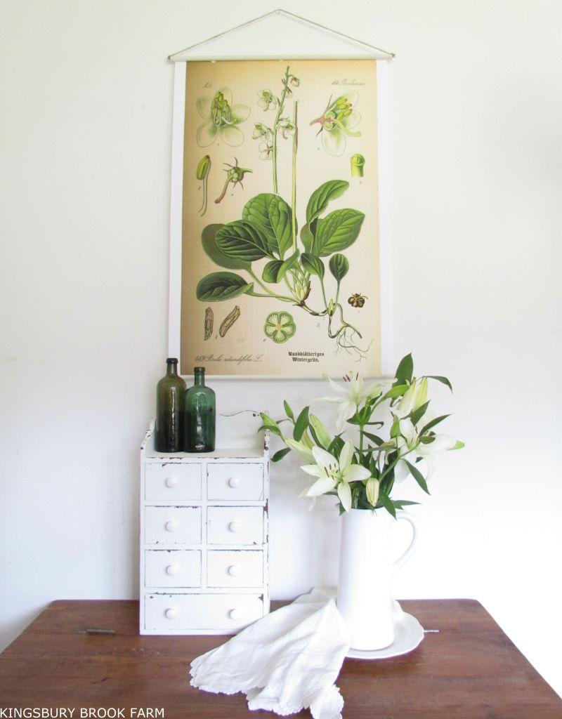 Botanical Tutorial from Kingsbury Brook Farm